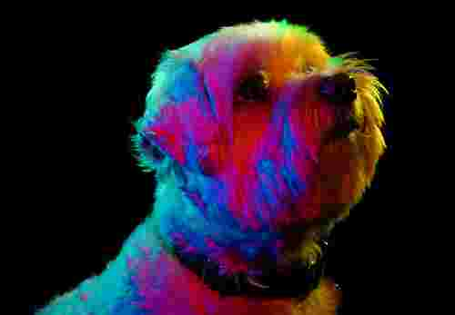 Colorful Portraits of Adoptable Dogs by Paul Octavious